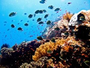 3666272876_06a6d75c65 (Diving)
