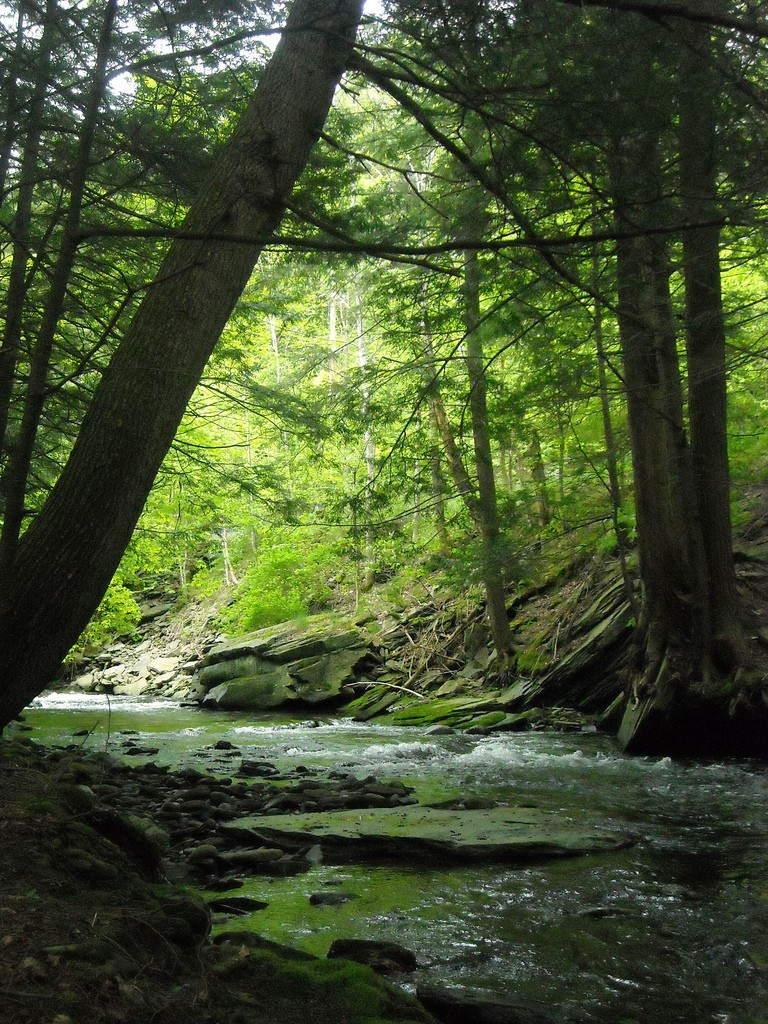 Catskills nature