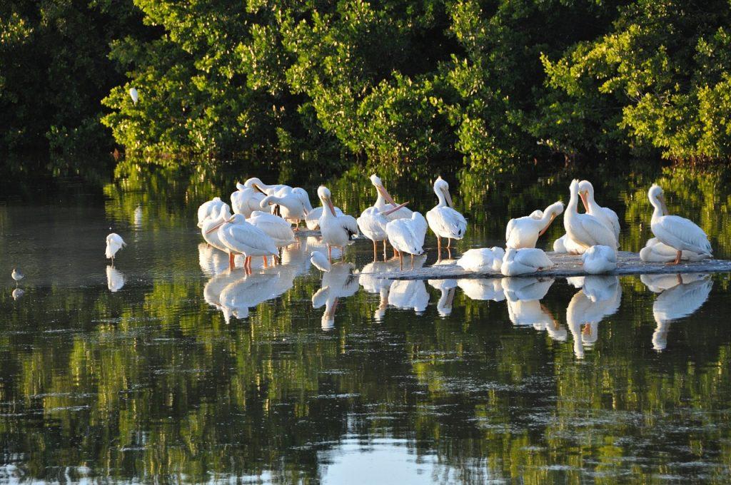 Sanibel Island - Florida