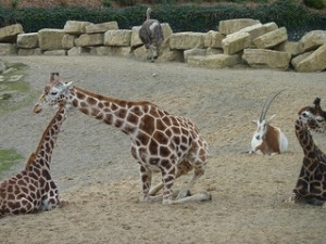 Dublin Zoo (Top three best kid friendly holiday destinations in Europe)
