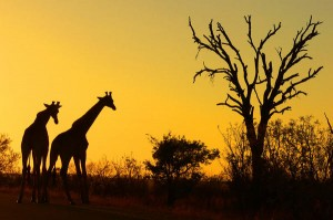 Sunrise (6 Things to Do in South Africa)