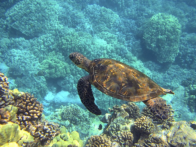 swim with sea turtles in Mexico