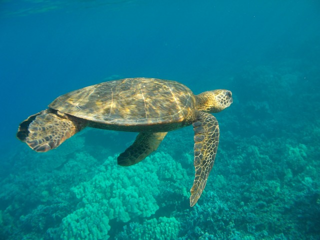 swimming with sea turtles in Greece