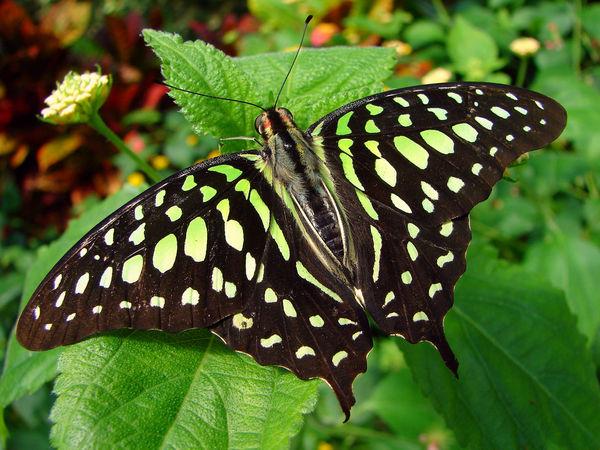 Kirstenbosche Botanical Gardens