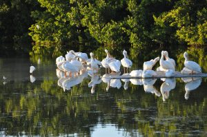 Sanibel Island – Florida (Are You Visiting Sanibel Island, Florida? Try These 5 Activities!)