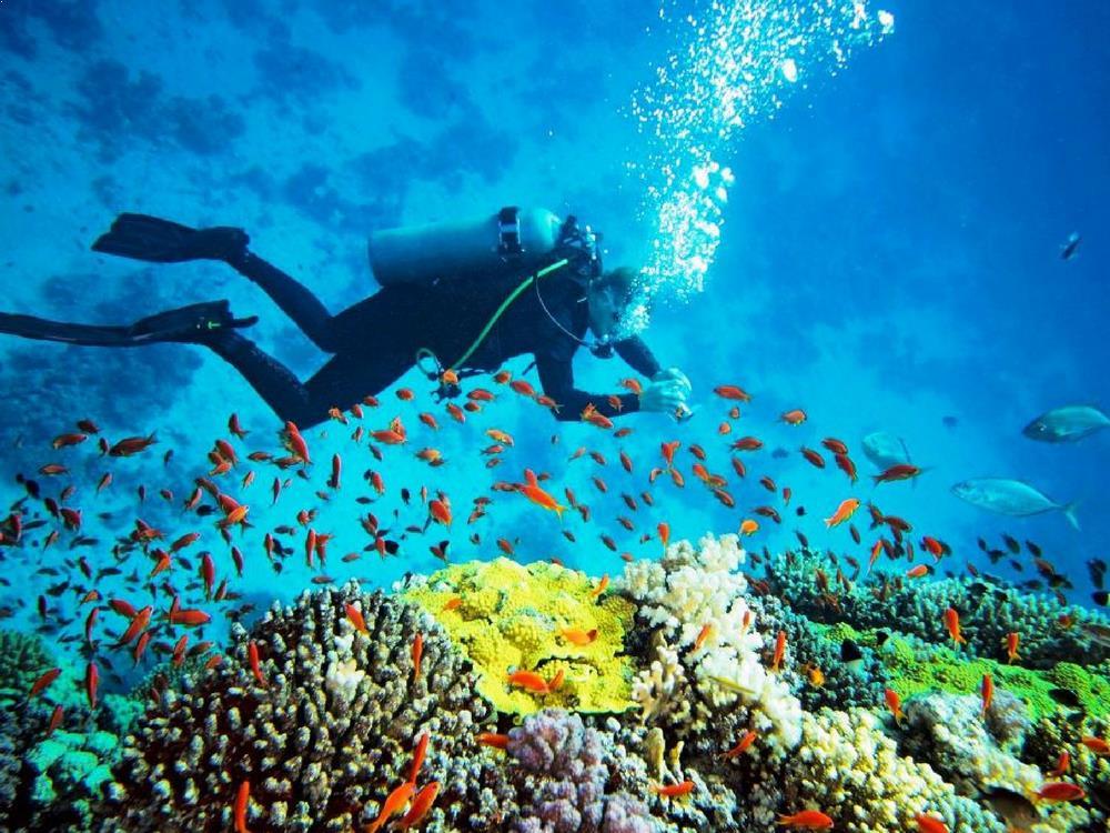 Scuba Diving - Andaman Islands, India