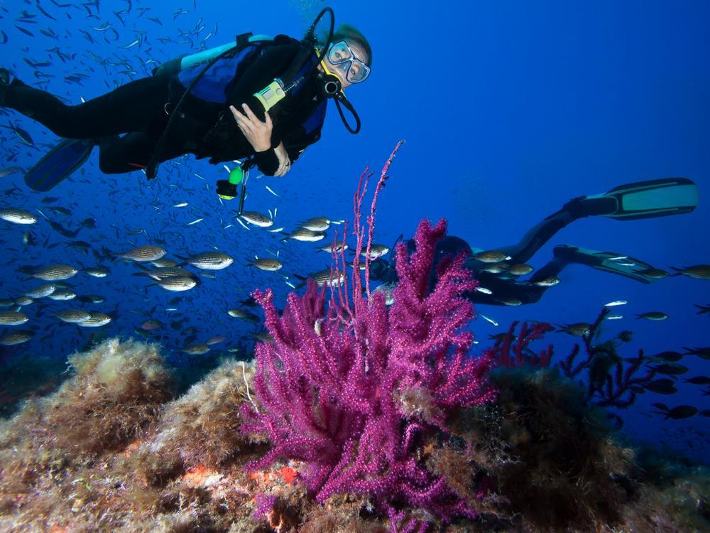 Scuba Diving - Raja Ampat, Indonesia
