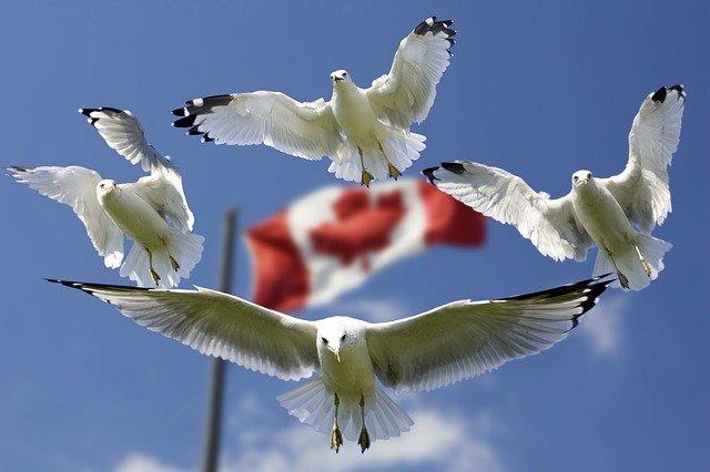 Canadian E-Visa